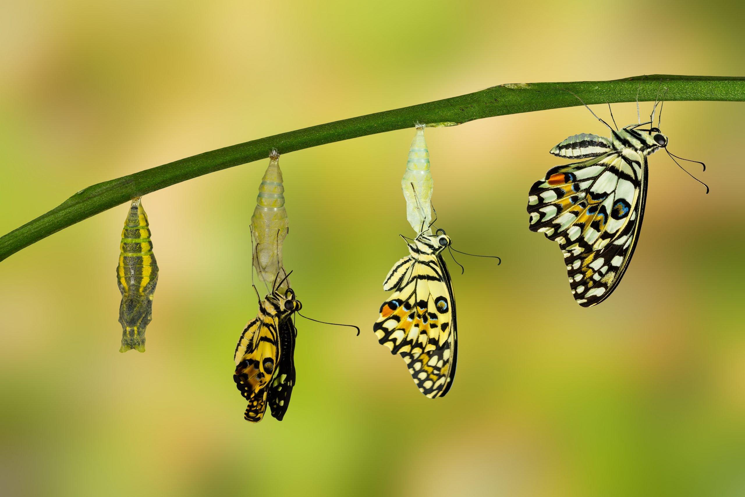 make money selling transformation